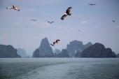 Thailand Seeadler Andaman Sea (2048x1365)